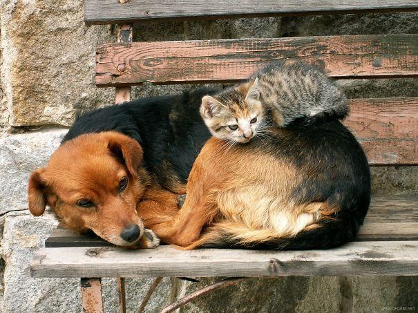 gatos dormidos en perros 20