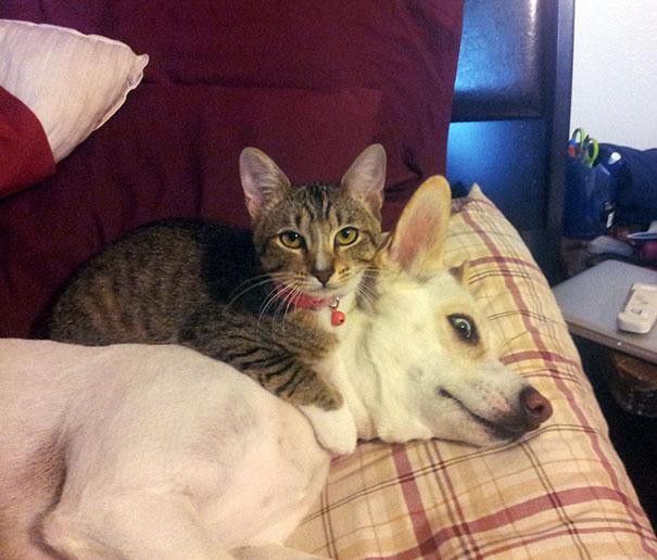 gatos dormidos en perros 21