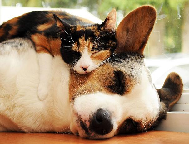 gatos dormidos en perros 22