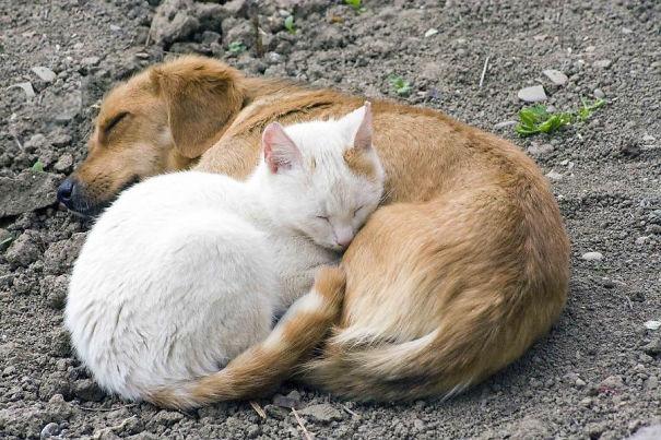 gatos dormidos en perros 23