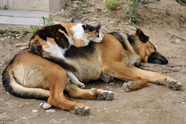 gatos dormidos en perros 24
