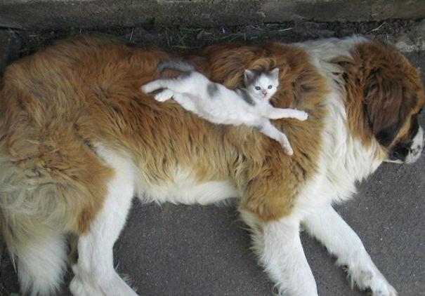 gatos dormidos en perros 3