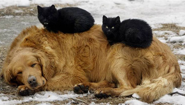 gatos dormidos en perros 8