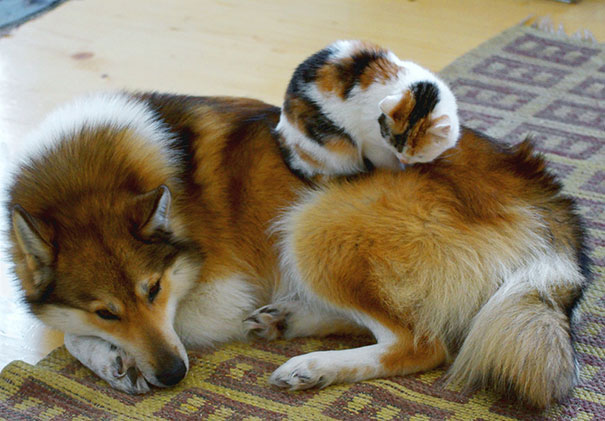 gatos dormidos en perros 9