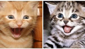 Gatos-felices