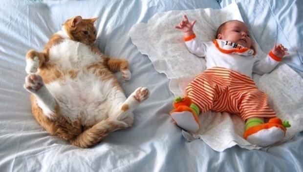 gatos humanos 1