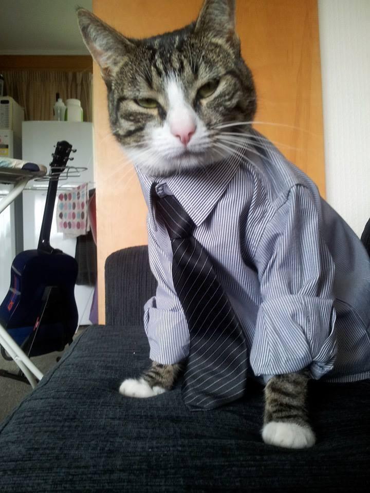 gatos humanos 10