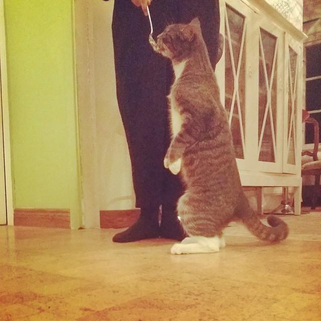 gatos humanos 3