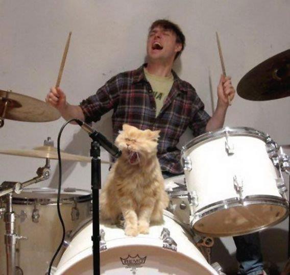 gatos humanos 6