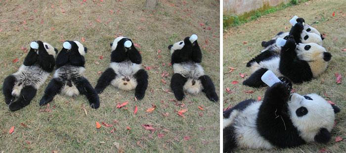 guarderia--panda