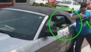hombre salva perro de auto id