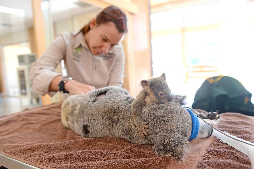 koala abraza madre 2