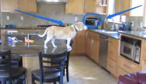 Lucy roba comida