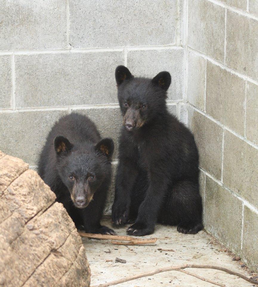 osos-huerfanos
