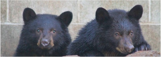 osos-jordan-athena-mayores