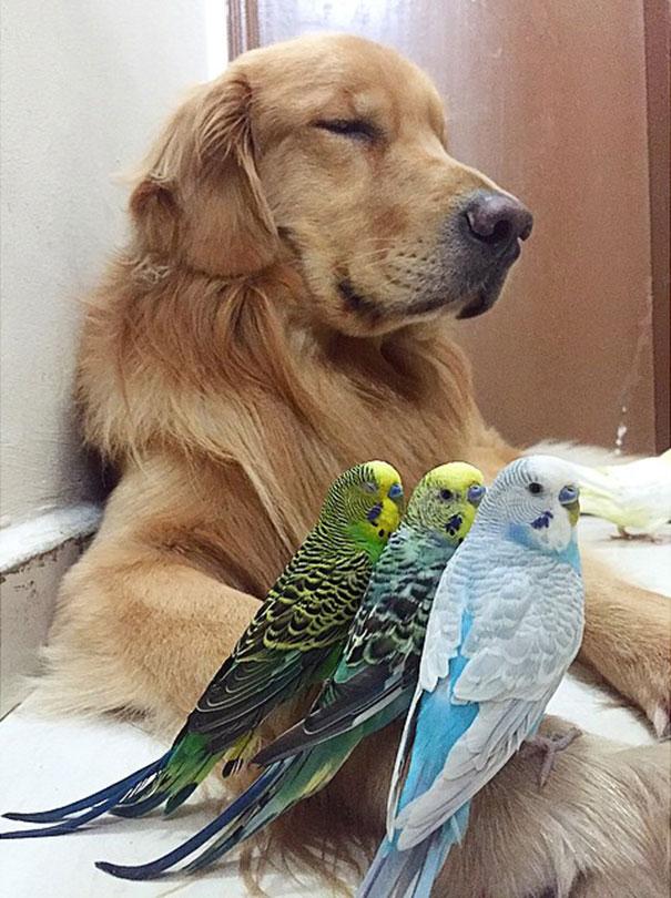 pajaros-perro