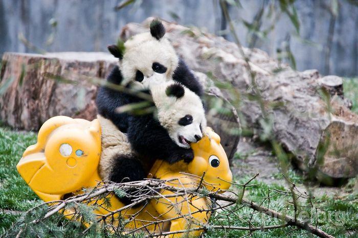 panda-daycare