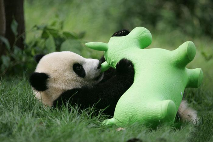 panda-jardin