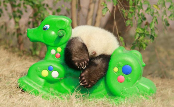 panda-juega-columpio