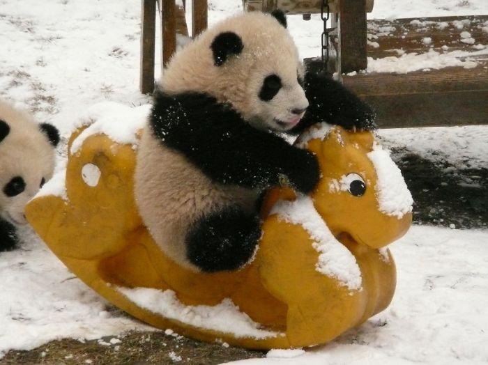 panda-juega
