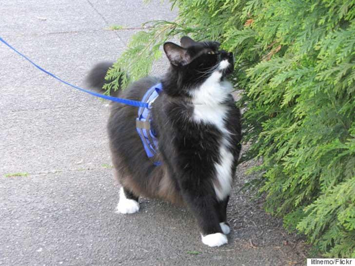 pasea a tu gato 2