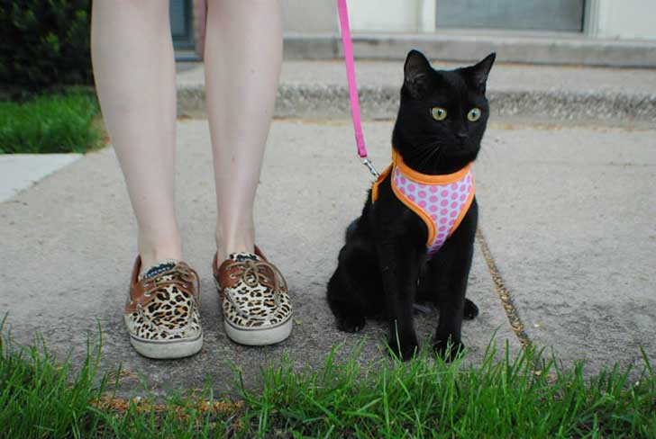 pasea a tu gato 3
