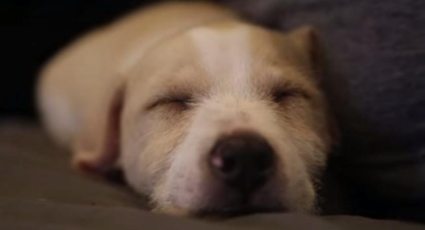 Perrito-durmiendo