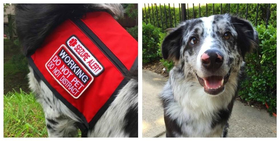 perro-alerta-medica