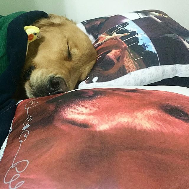 perro-duerme-pajaro