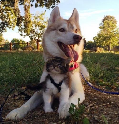 Perro-gatito