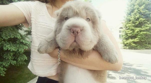 perro oso 1