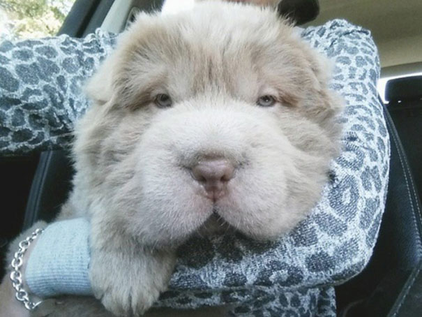 perro oso 2