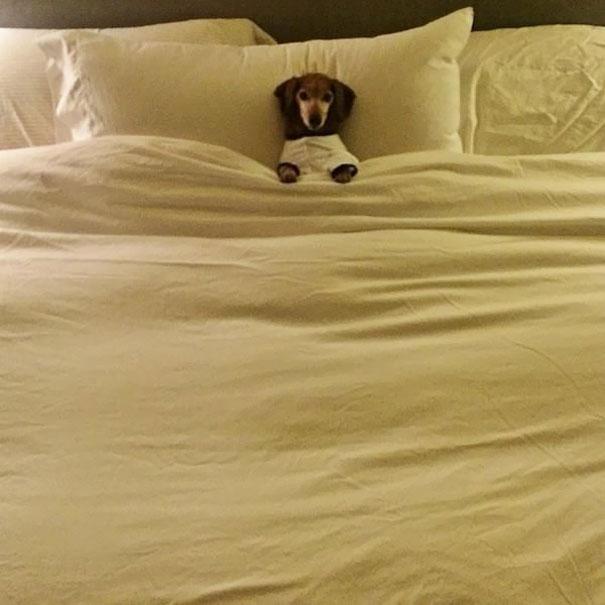 perros en cama 13