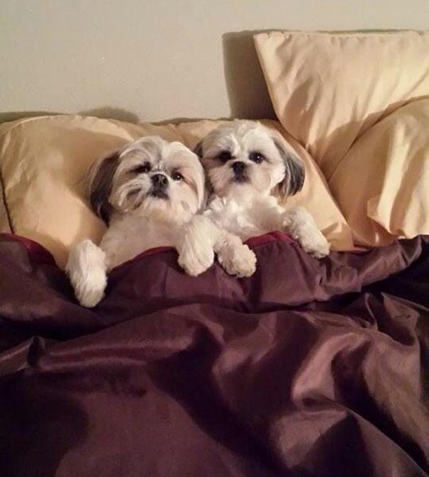 perros en cama 18
