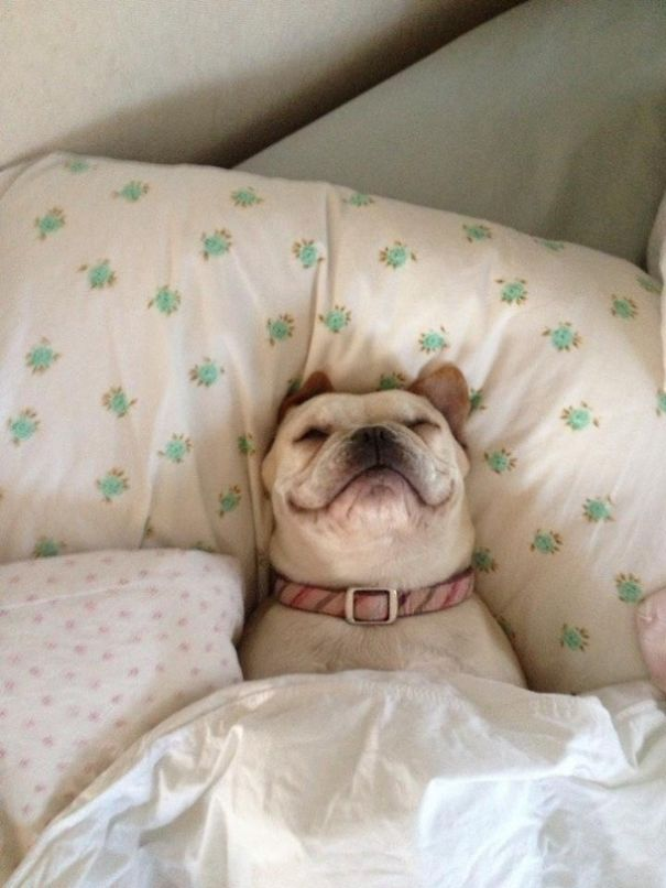perros en cama 3