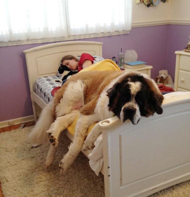 perros en cama 4