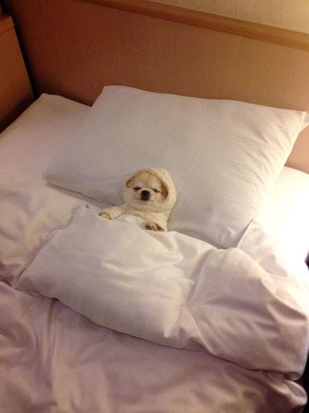 perros en cama 5