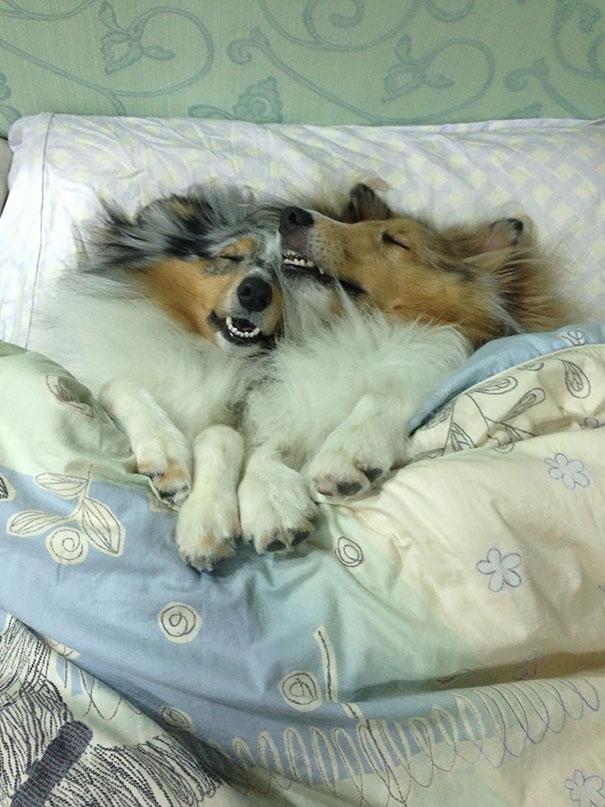 perros en cama 7