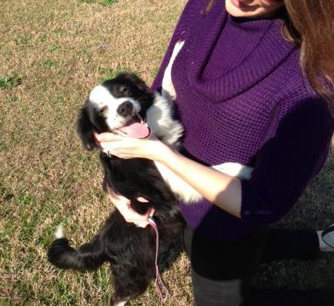perros que fueron salvados 11
