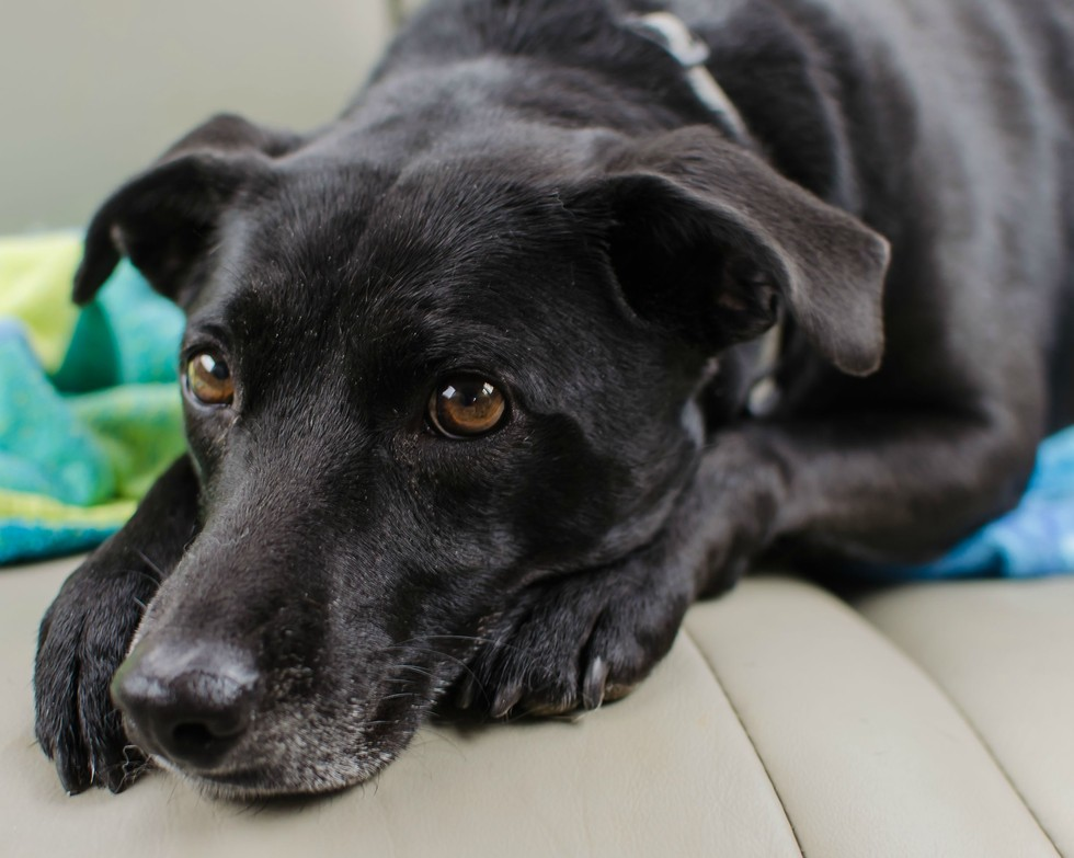 perros que fueron salvados 30