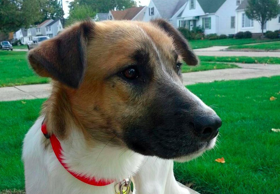 perros que fueron salvados 31