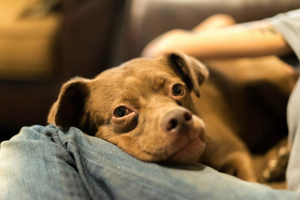 perros que fueron salvados 5