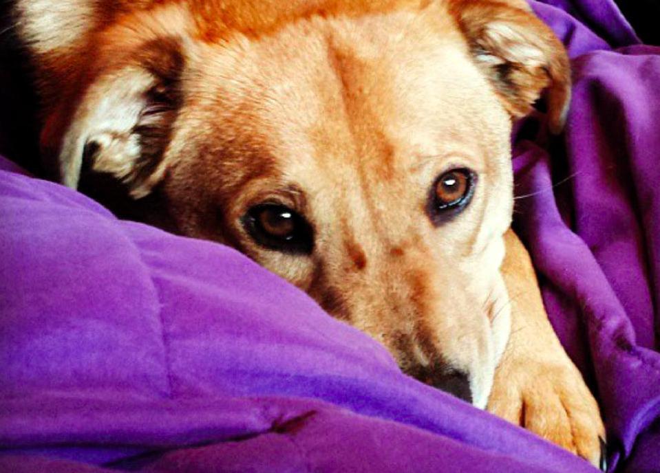 perros que fueron salvados 7