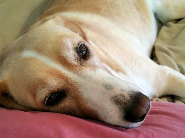 perros que fueron salvados 9