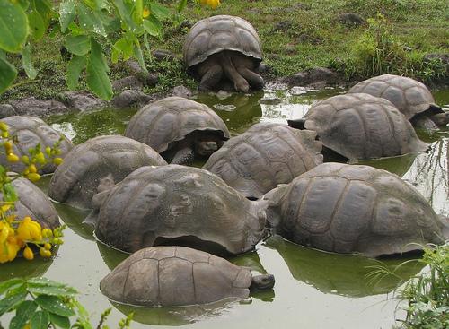 recuperacion-tortugas