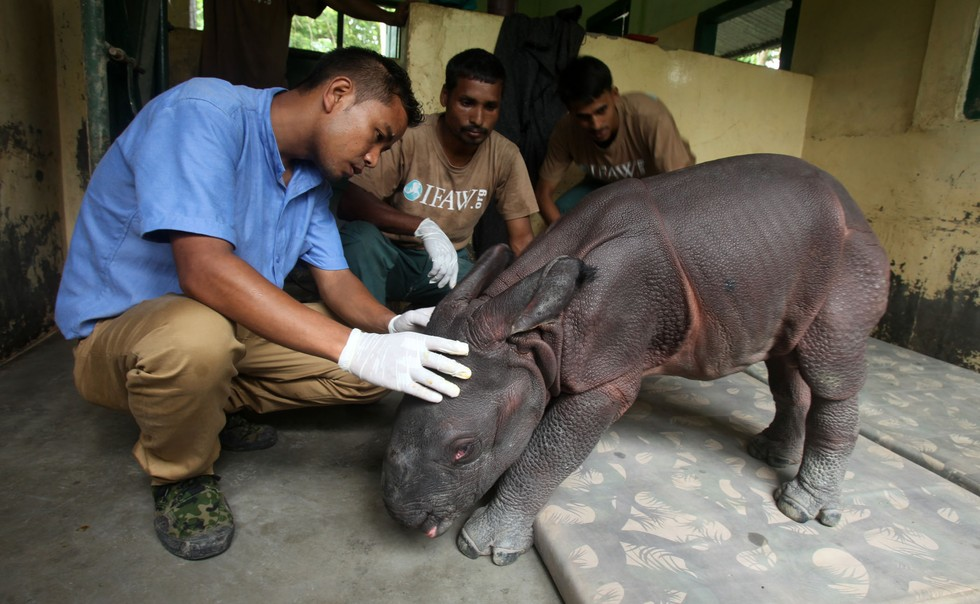 Rinoceronte-bebe