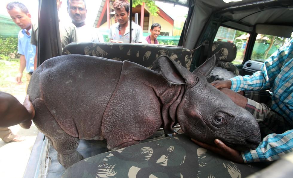 Rinoceronte-bebesito