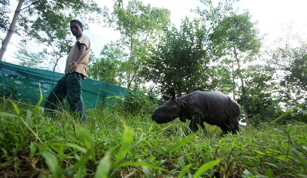 Rinoceronte-cuidados