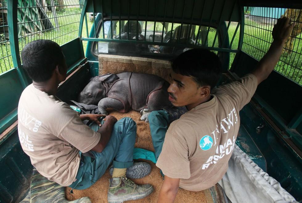 Rinoceronte-recien-nacido