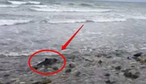 salvando delfin